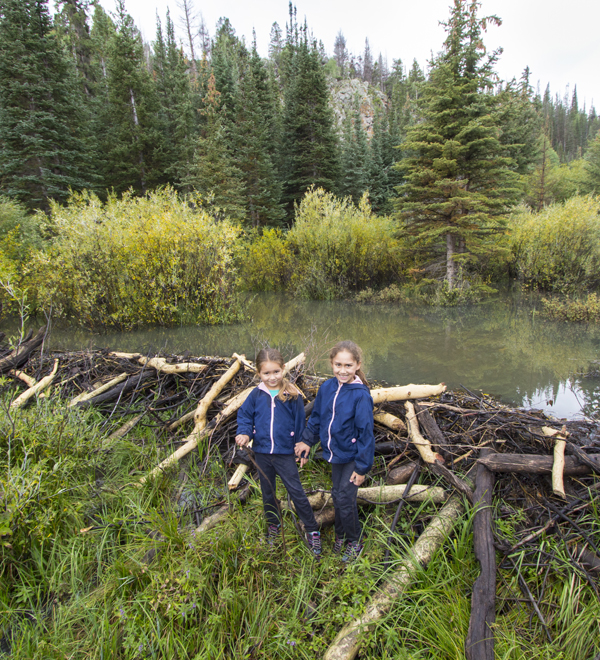 Water - Cheap and Cheerful Restoration in Utah: Beaver