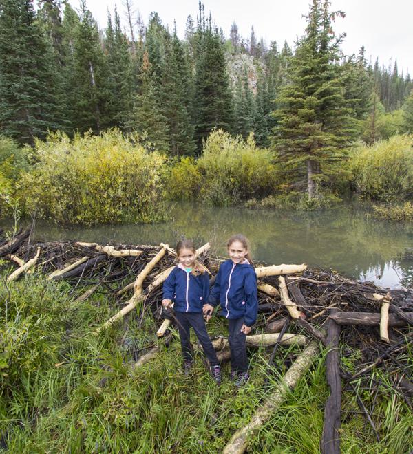 Water - Cheap and Cheerful Restoration in Utah: Beaver
