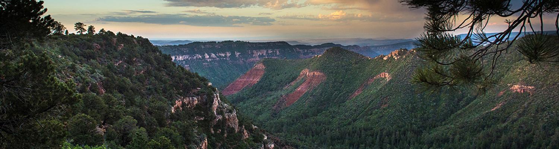 Utah Forests - Header