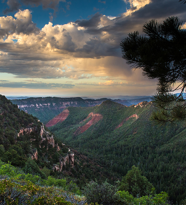 Land - Utah Forests New