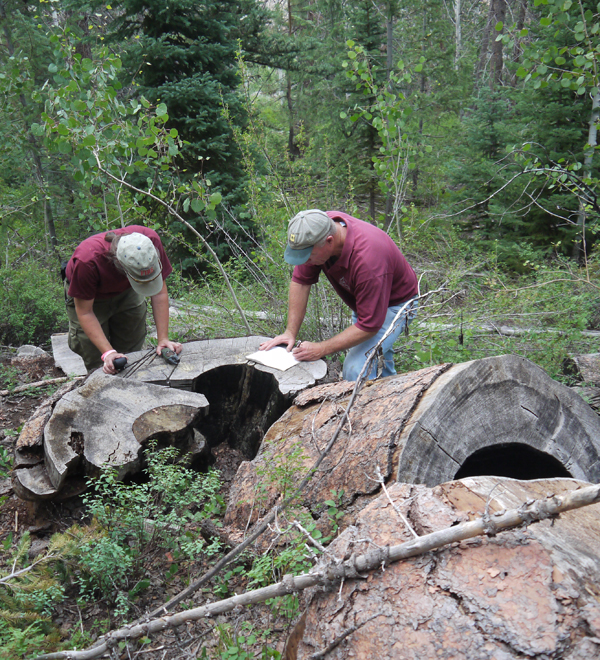 Utah Forests - Solving Complex Problems