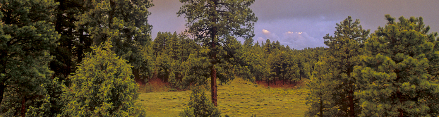 Arizona Forests - Header Image