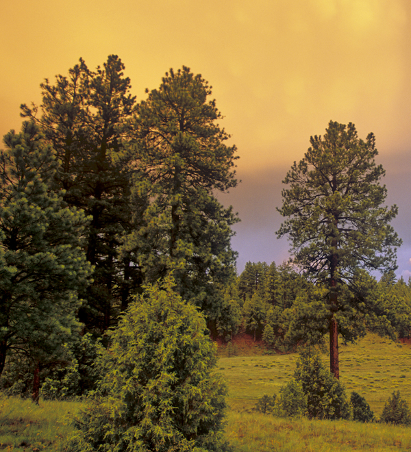 Land - Arizona Forests New