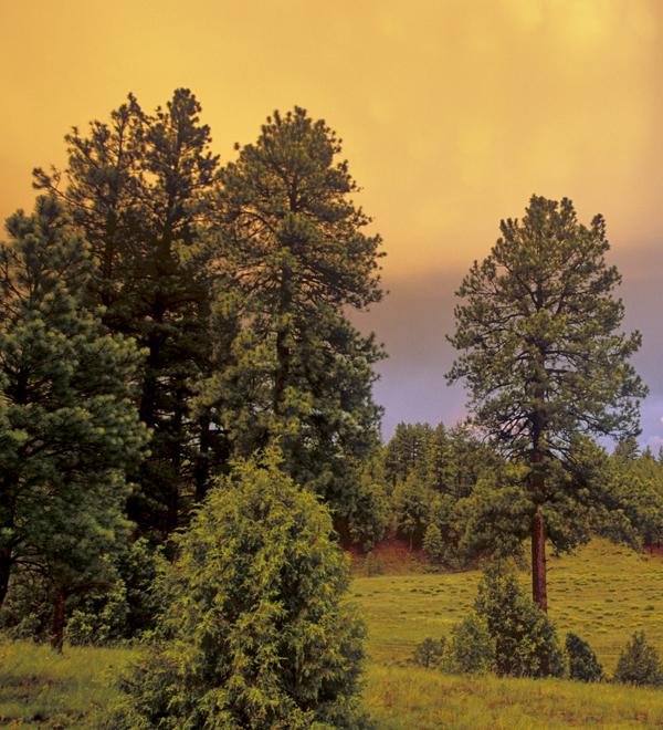 Land - Arizona Forests New