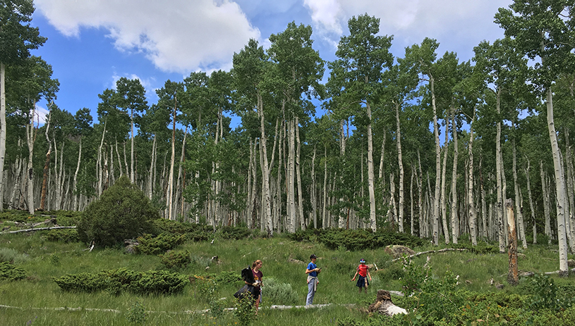 Removing invasive species from the Pando Clone