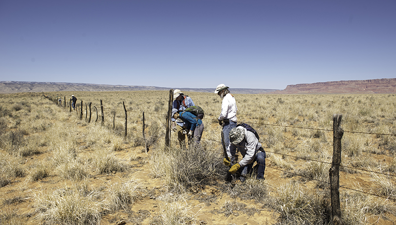 Volunteers removing barbed wire