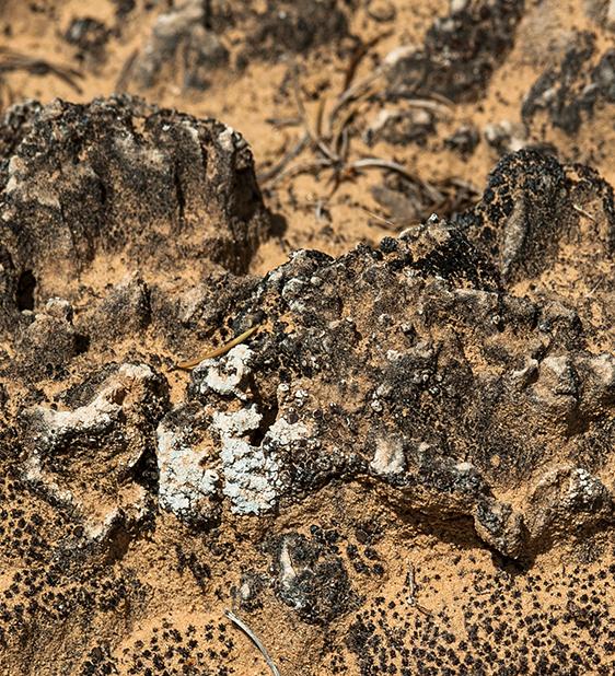 wildlife - biocrust