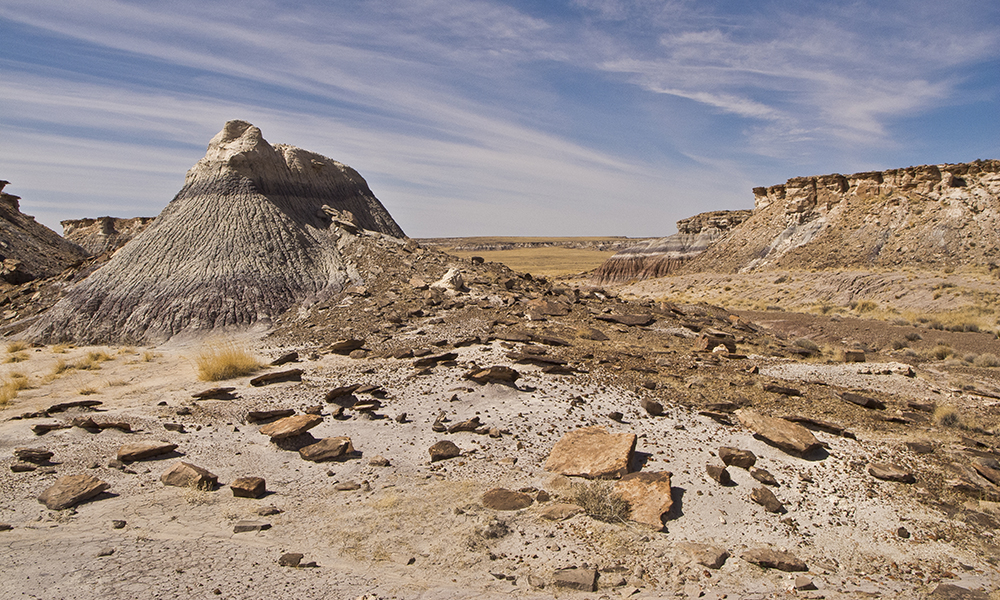 Petrified Forest National Park | Grand Canyon Trust