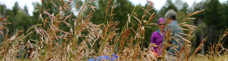 Native Plants - header