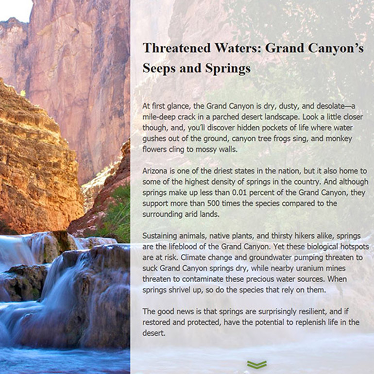 Springs in the Grand Canyon