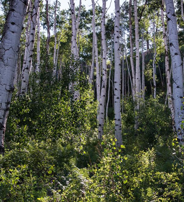 Image result for utah forests