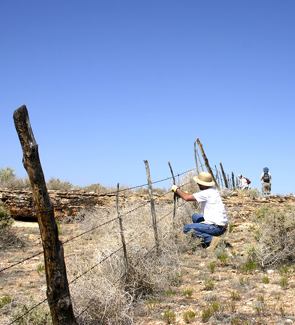 Pronghorn fence repair